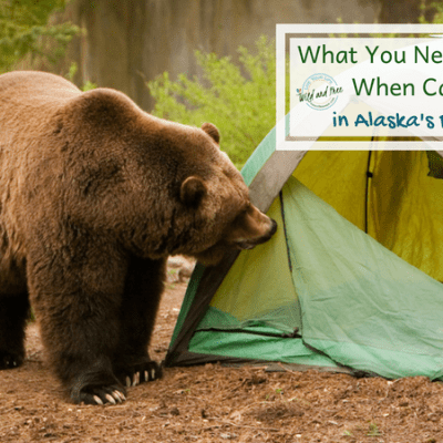 What You Need to Know When Camping in Alaska's Bear Country