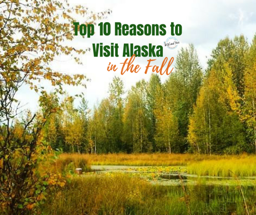 Top 10 Reasons to Visit Alaska in the Fall #fall #fallcolors #alaska #alaskaitinerary #visitalaska
