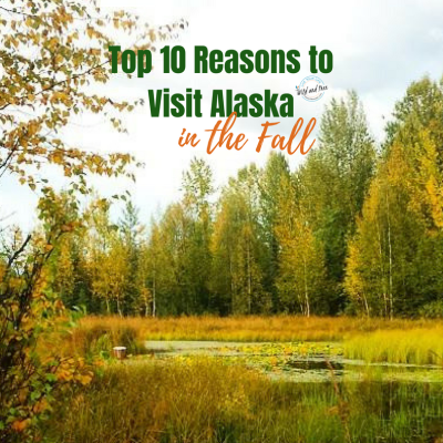 Top 10 Reasons to Visit Alaska in the Fall