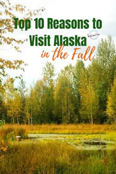 Top 10 Reasons to Visit Alaska in the Fall #fall #fallcolors #alaska #alaskaitinerary #visitalaska