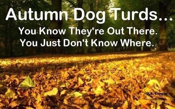 Well, these will be fun to find. #fall #autumn #fallmemes #memes #hideandseek