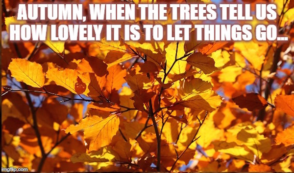 Autumn, when the trees tell us how lovely it is to let things go #fall #autumn #fallmemes #memes #letgo #letthingsgo #lettinggo