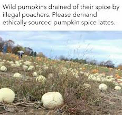 Now that's funny #fall #autumn #fallmemes #memes #psl #pumpkinspice #pumpkinspicelattes #whitepumpkins