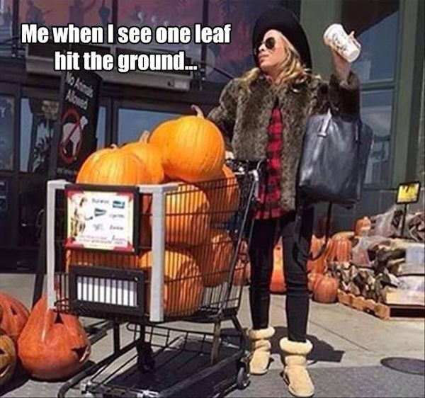 Me when I see one leaf hit the ground #truth #autumn #fallmemes #psl #pumpkinspicelattes #bringonfall