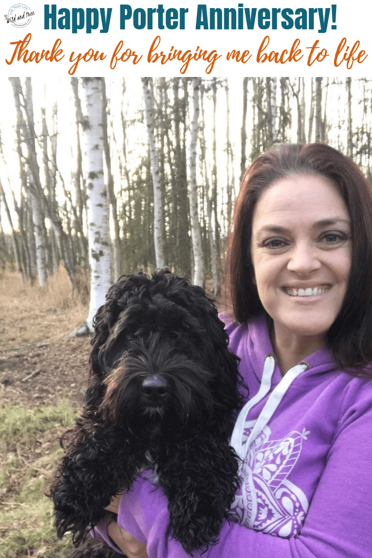 Happy Puppy Anniversary, Porter! This is the story I shared on Instagram about the impact Porter Storm, my Mini Multigenerational Australian Labradoodle, has had on my life in Alaska. #serviceanimal #servicedog #miniaustralianlabradoodle #minidoodle