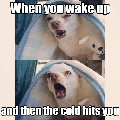 Maybe just stay in your tent all day? #camping #campingmemes #wintercamping
