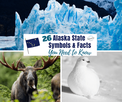 Alaska State Symbols & State Facts that you need to know. #alaska #alaskafacts #alaskatravel