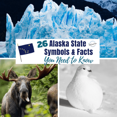 26 Alaska State Symbols & Facts You Need to Know