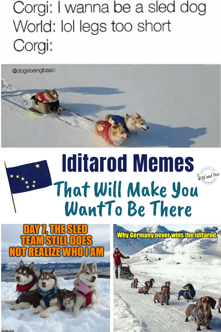 Iditarod Memes That Will Make You Want To Be There #mushing #iditarod #dogmemes #memes