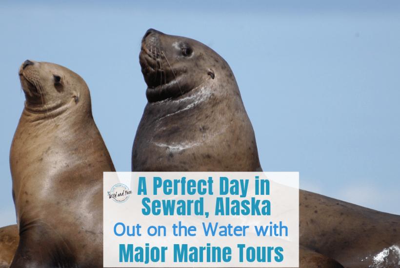 A Perfect Day in Seward, Alaska Out on the Water with Major Marine Tours #sewardalaska #cruises #alaska