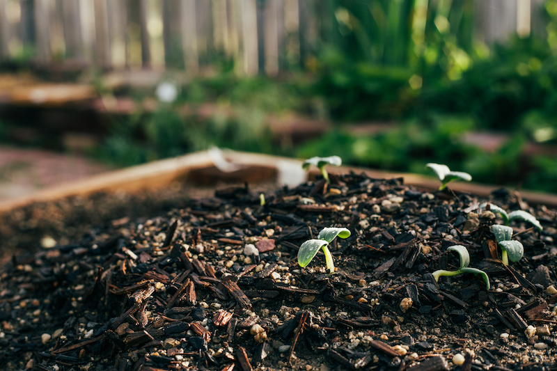 Vegetable seedlings ready to grow in the spring garden #gardentips #vegetablegardening