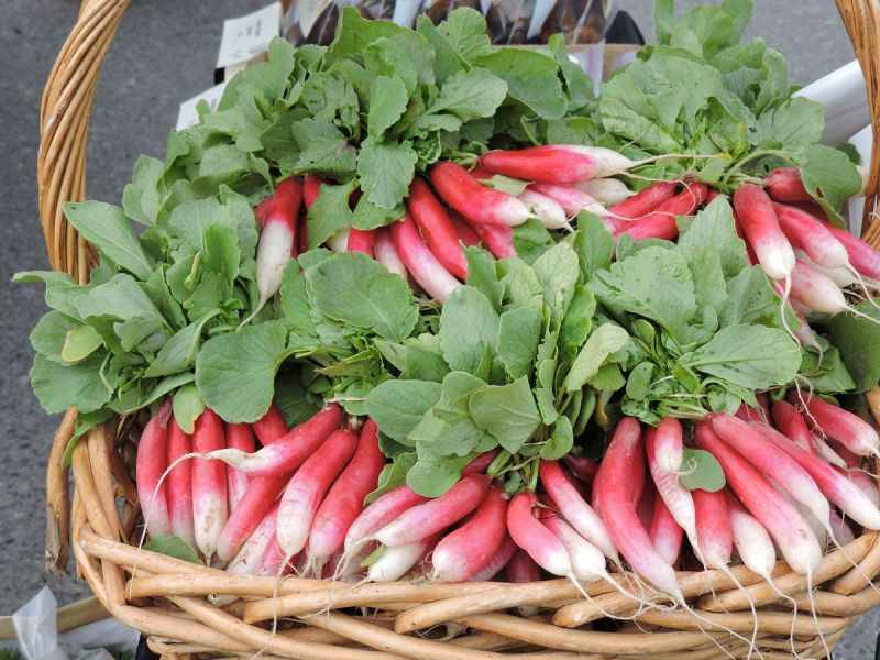 French Radishes at local Anchorage Farmers Markets