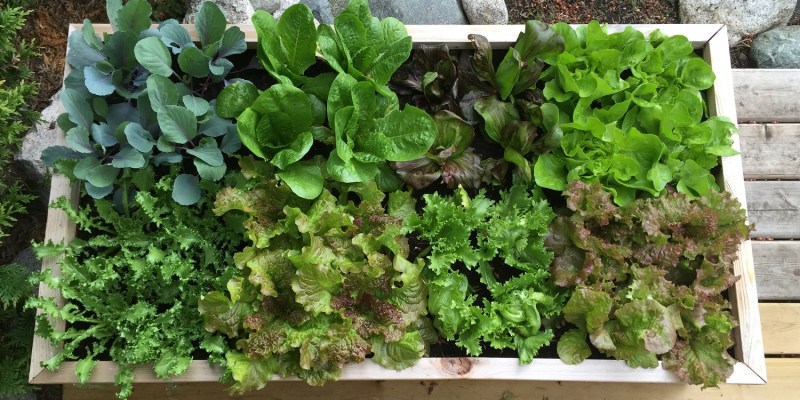 Container Garden with Square Foot Gardening