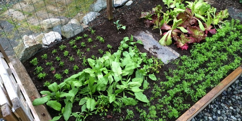 Square Foot Gardening Raised Bed