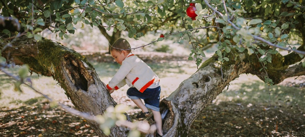 apple orchard | MyLila