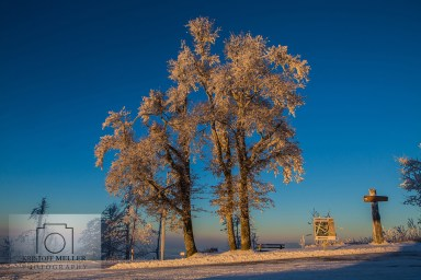Bäume im erstem Morgenlicht am Gipfel-Parkplatz