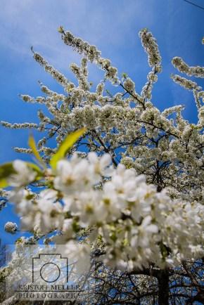 Frühling / Blütezeit im Eggener Tal / Markgräflerland