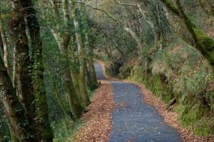 beautiful wooded path