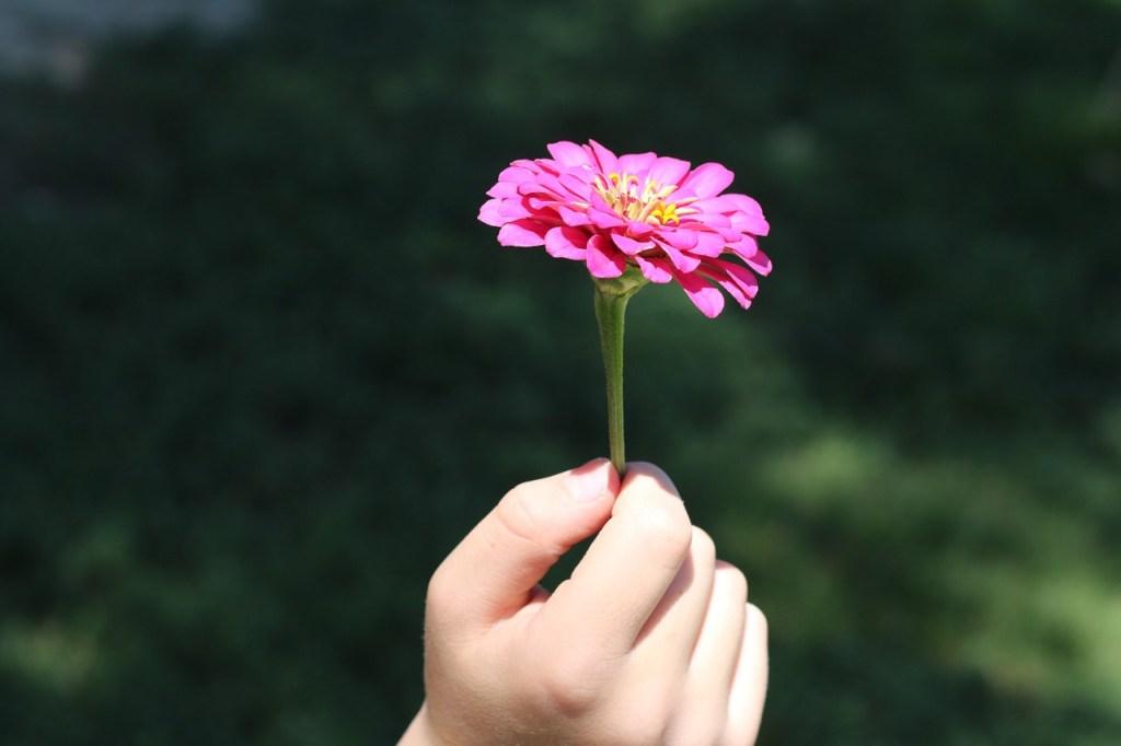 flower-574653_1280