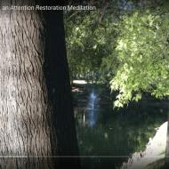 Shrewsbury Lake Pines: an Attention Restoration Meditation (3 minutes)