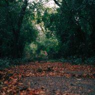 Grounding Awareness (9 minutes)