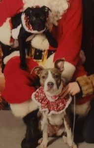 puppies & Santa