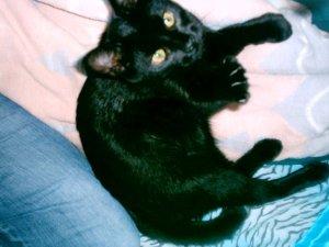 Jasper as a kitten