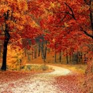 fall-1072821_1920-pixabay