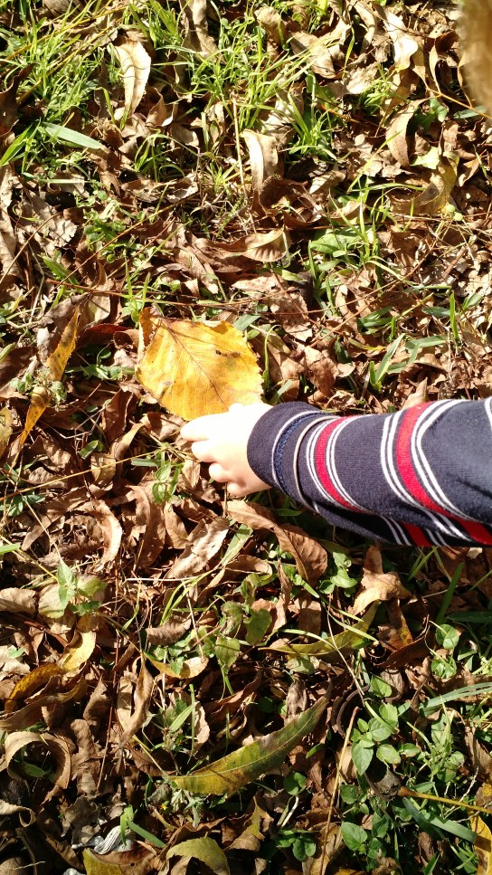 How to Have a Nature Walk in Autumn | Kristy's Cottage blog