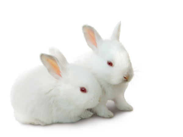 Business Musings: Popcorn Bunnies (A Process Blog)