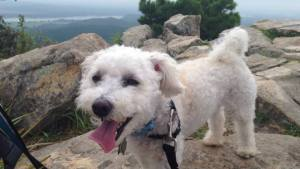 Max hiking Pinnacle