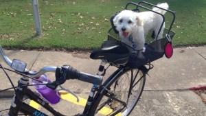 Max on bike