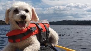 Max kayaking