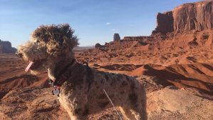 Drover - Monument Valley