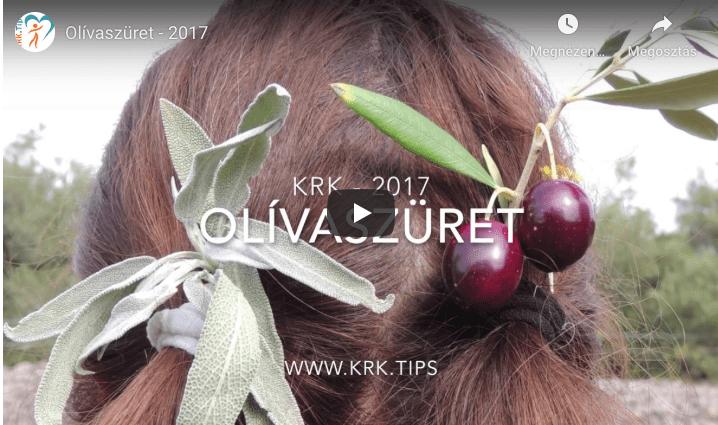 Olívát szüreteltünk