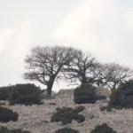 Kőtenger Krk szigeten