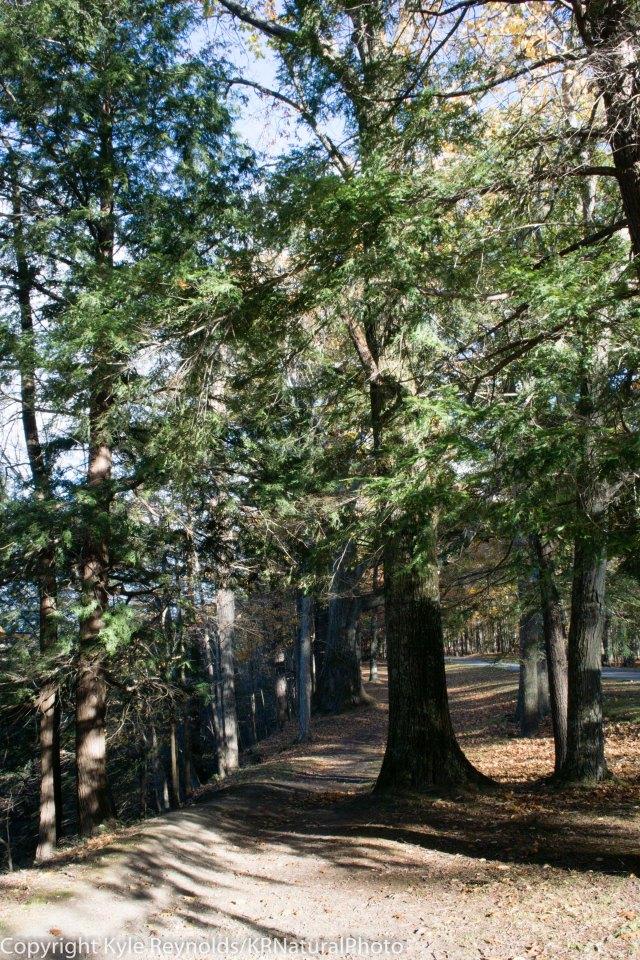 Letchworth State Park_October 25, 2015_423