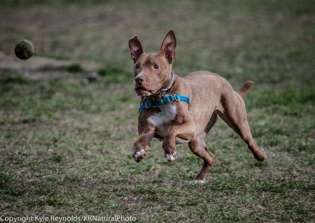 Ithaca Dog Park_November 27, 2015_110