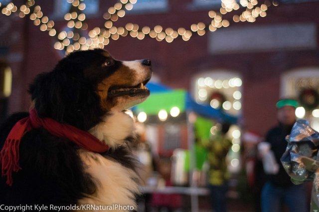 sparkle-christmas_december-05-2015_65
