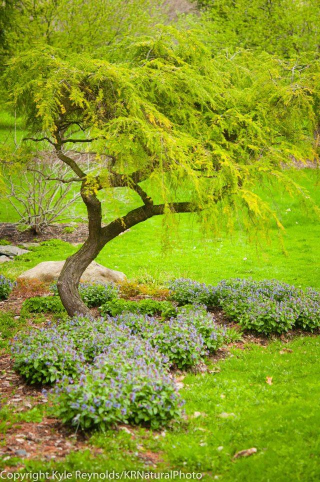 Cornell Plantations_April 25, 2017_58