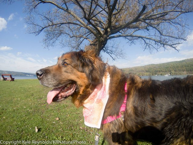 Kira at Seneca Lake
