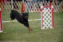 Wine Country Circuit Dog Show_September 29, 2017_1929