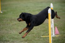 Wine Country Circuit Dog Show_September 29, 2017_1933