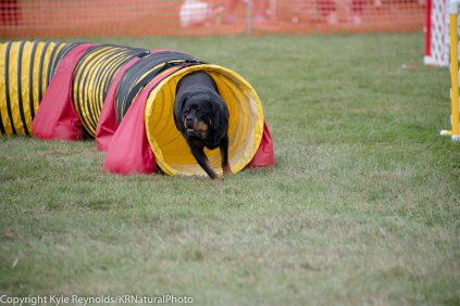 Wine Country Circuit Dog Show_September 29, 2017_1935