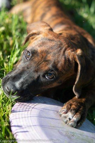 Foster puppies_June 26, 2018_301