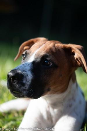 Foster puppies_June 26, 2018_335