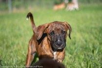 Foster puppies_June 26, 2018_426