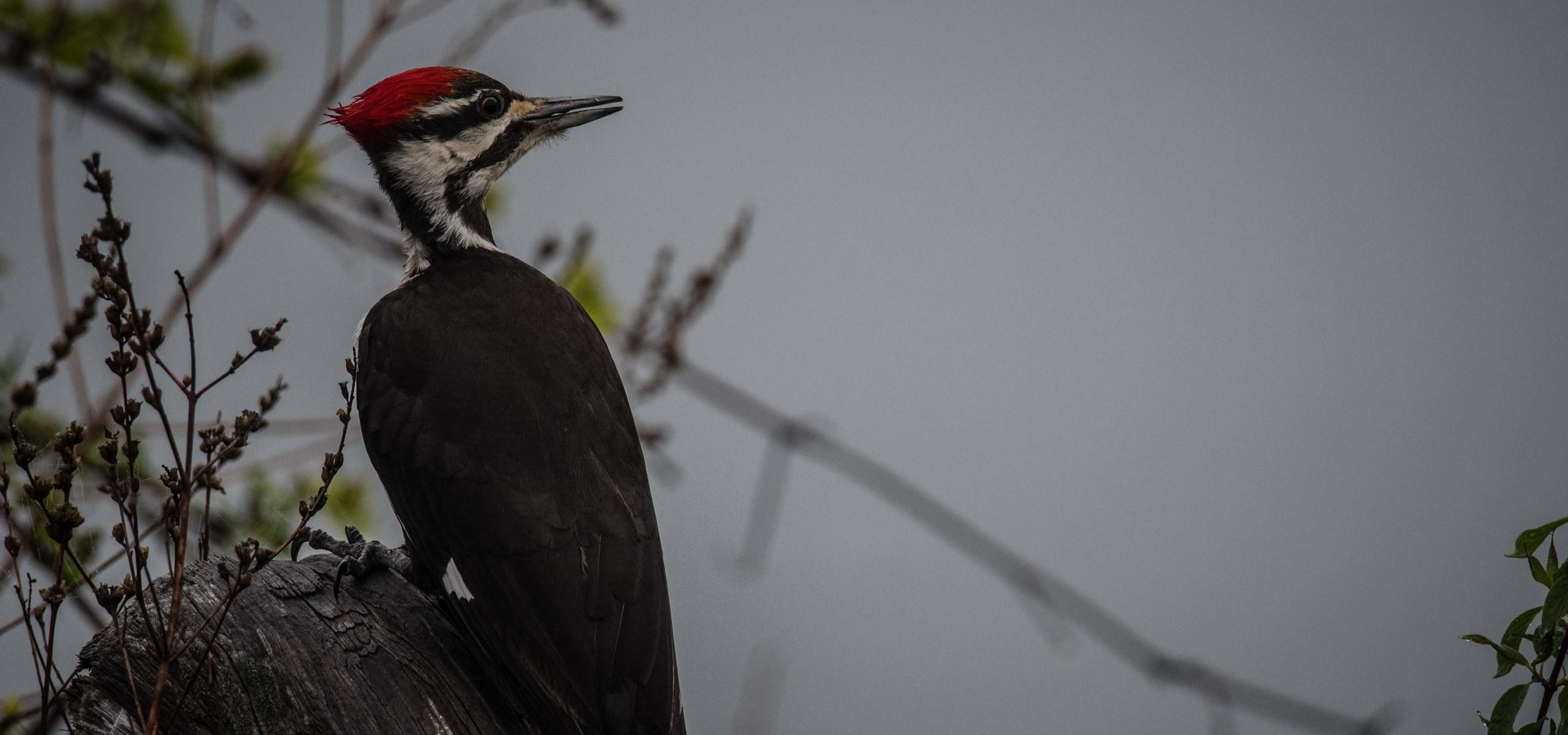 Bird near Cayuga Lake