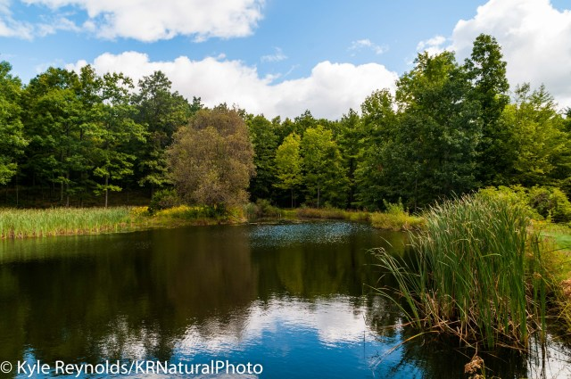 Pond at Steege Hill in New York