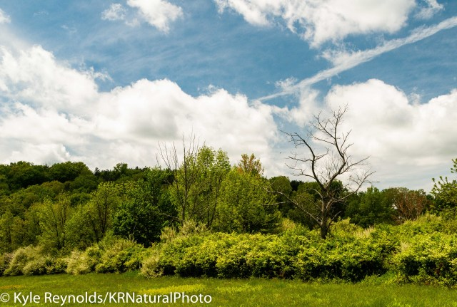 Tanglewood Fields and Trees